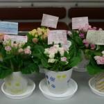 2月の誕生会では詫間小学校5年生から踊りとお花のプレゼント