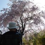 朝日山森林公園お花見
